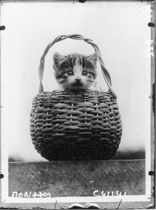 Kot w koszyku